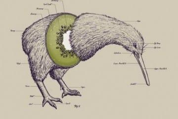 anatomy-kiwi-bird_1332094270239624